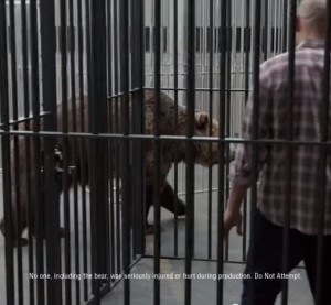 "General Motors has attempted to take the materials and F-150-Silverado wars viral with a few new YouTube ads mocking people's perceptions of aluminum versus high-strength steel. A screenshot featuring a ""taste test"" of aluminum and steel cages to evade a grizzly is shown here. (Screenshot from Chevrolet YouTube channel)"